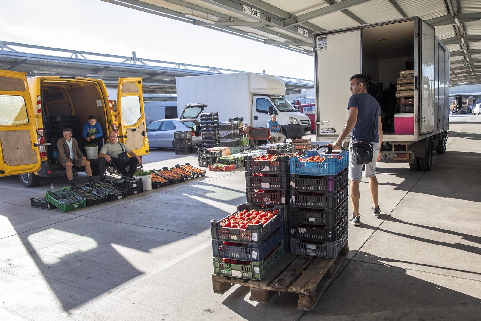 10 ezer négyzetméteres zöldség- és gyümölcskezelő hűtőházat építenek a régi dorozsmai nagybani piac helyén