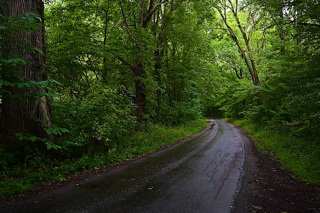 Rainy morning and a rural road