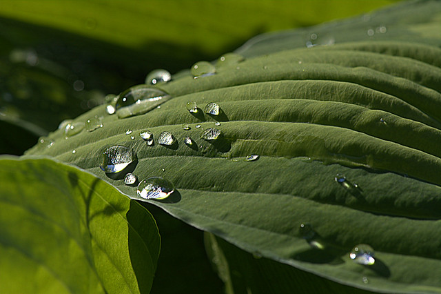 Drops in the light