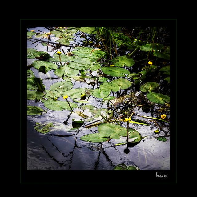 Dia-box  -  leaves II