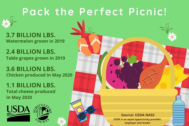 National Picnic Month infographic