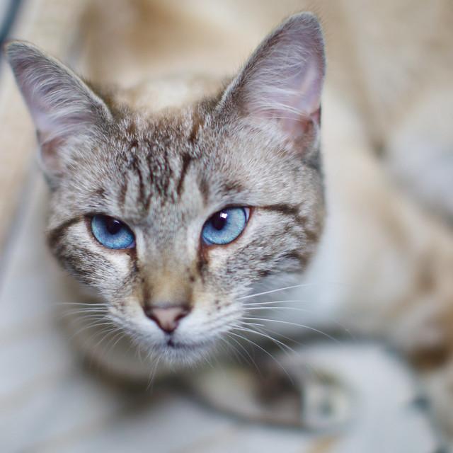 Le regard si bleu