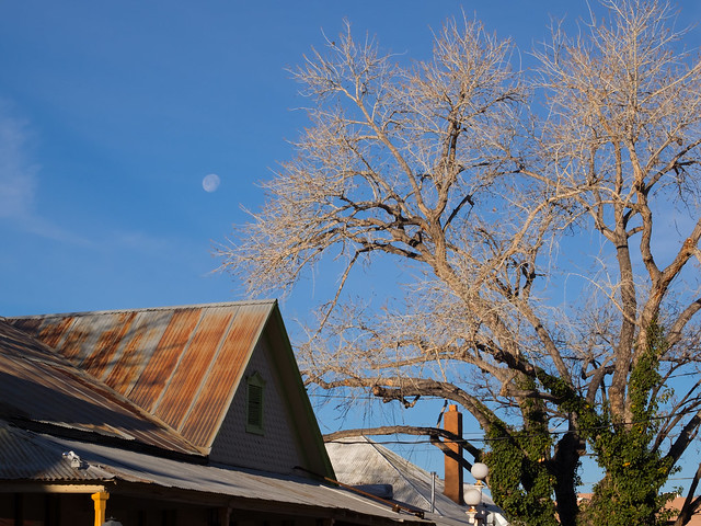 moon over Old Town roof tops and tree