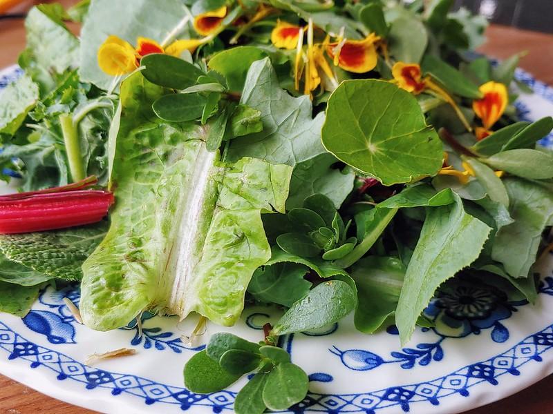 Purslane on a garden salad