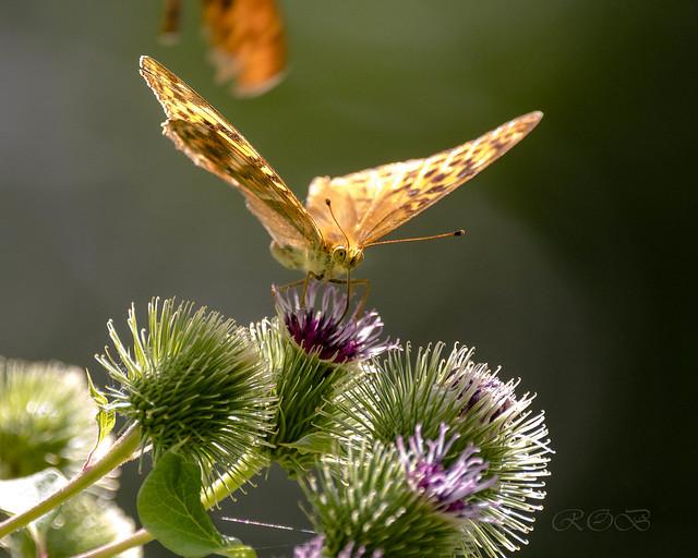 Insekten-46522-20200728.jpg