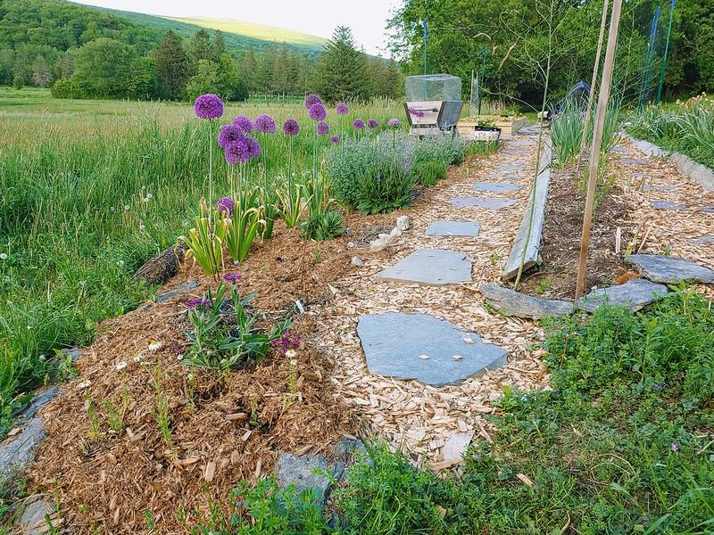 Chamomile, Amethyst Dream Bachelor Button, Purple Sensation Allium...