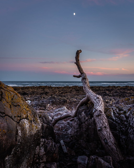 Driftwood and Moon