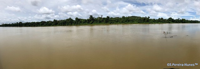 A panoramic view of the Suriname River, Suriname