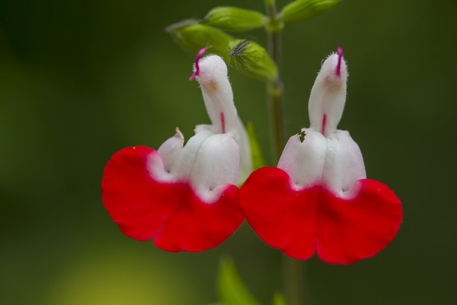 Summer flowers 144