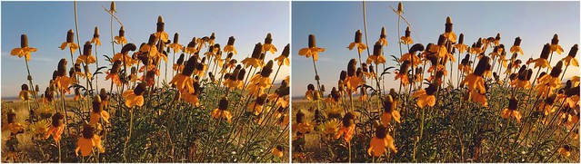 Sunset Wildflowers