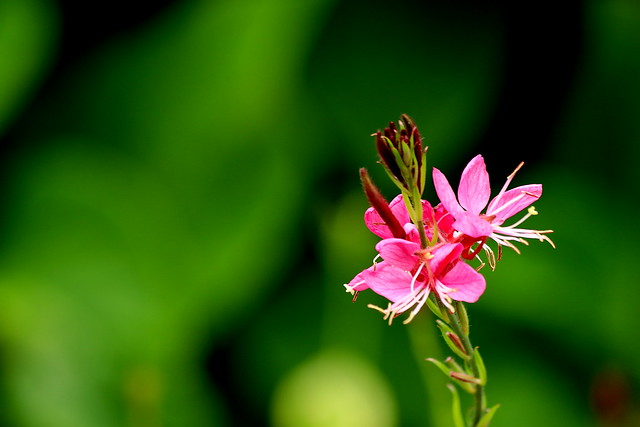 Tiny pink perennial flower