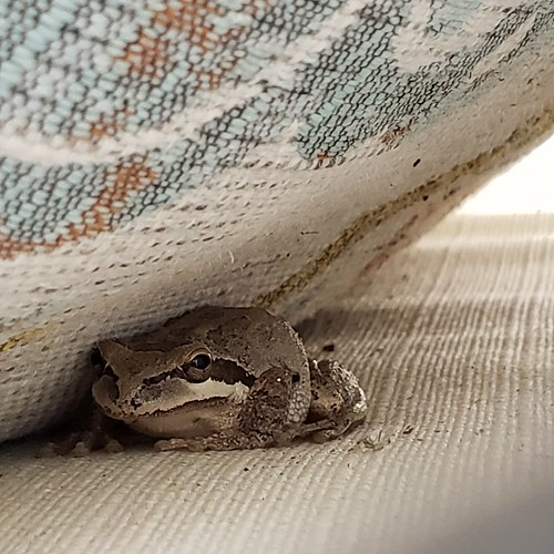 Frog in Cushion Manor | by mrsshecky