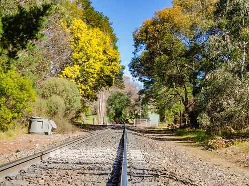 adelaide adelaidehills southaustralia australia sa nature scenic outdoor winter landscape rail railway track transport leadingline leadinglines olympusem10 olympusomd olympus microfourthirds lumix tree mainline tranquil