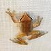 Frog's Companion