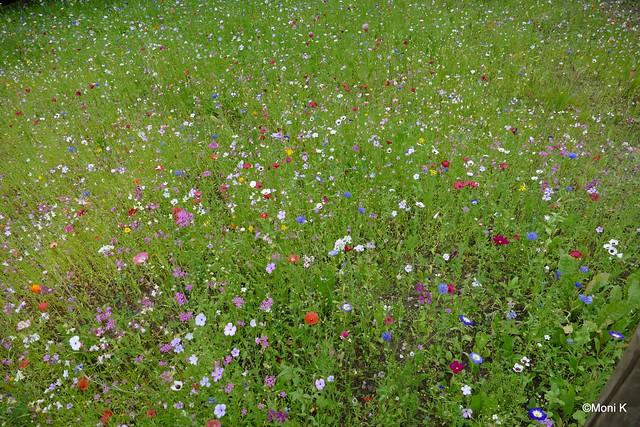 38-Blumenwiese