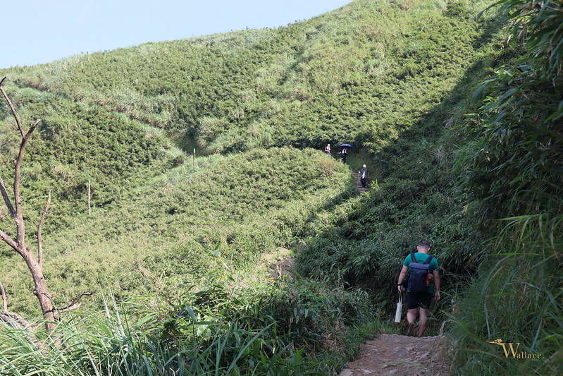 礁溪抹茶山