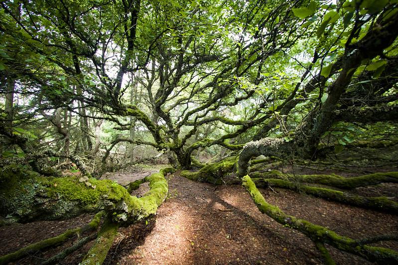 Nature in Denmark