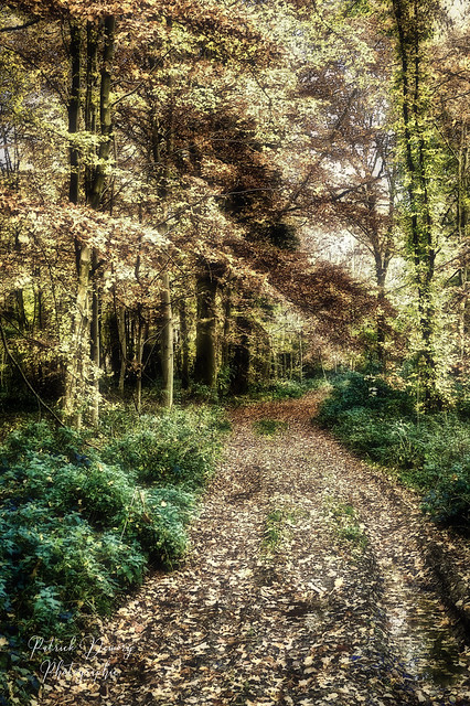 Forêt de Picardie