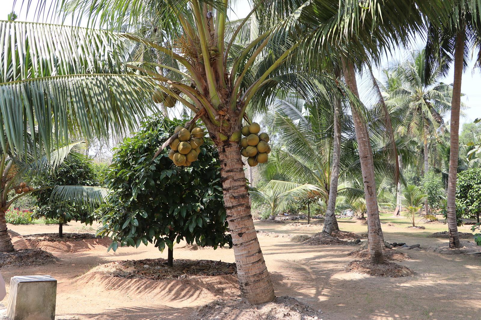 Ban dừa