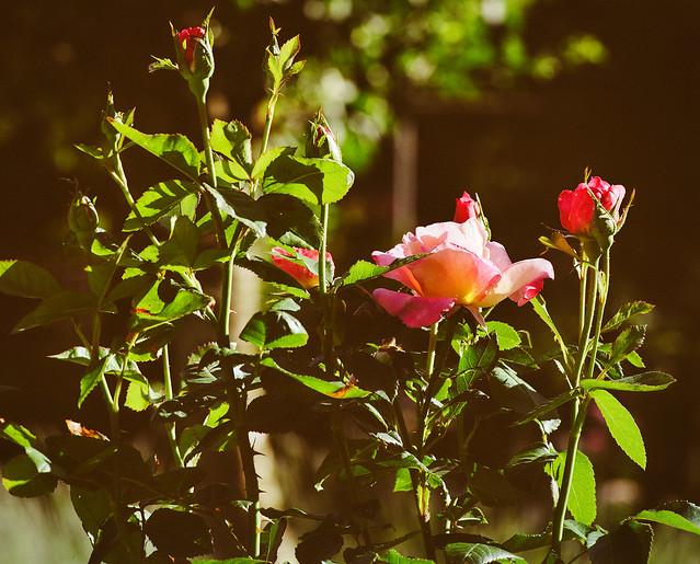 The scent of the flowers is far sweeter in the air than in the hand. (F. Bacon) - Der Duft der Blumen ist weit süßer in der Luft als in der Hand. (F. Bacon)