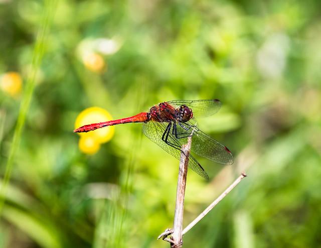 Insekten-46493-20200728.jpg