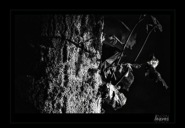 Dia-box  -  leaves III