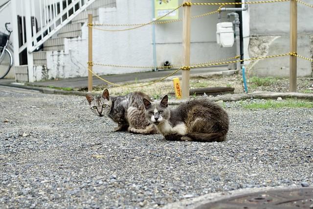 Today's Cat@2020ー07ー29