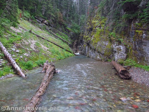 The stream below Hidden Falls en route to Grinnell Lake, Glacier National Park, Montana