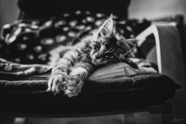 C comme chaton, chaleur et covid.  [Explored 2020 July 30th]