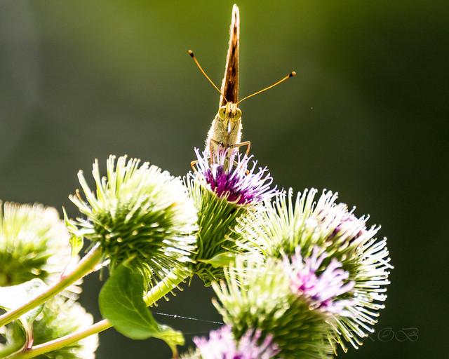 Insekten-46517-20200728.jpg