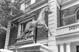 Horse, Craven Hill, Bayswater, Westminster, 1987 87-7i-55-positive_2400