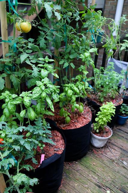 My Lil' Container Garden - Summer Garden 2020 7.29.2020_garden.22