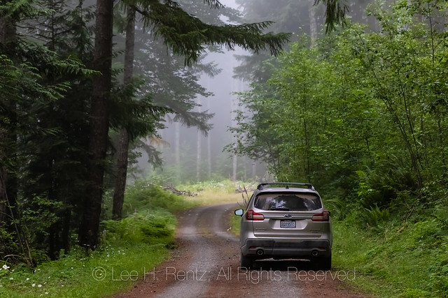 Forest Road Accessing Gifford Pinchot National Forest