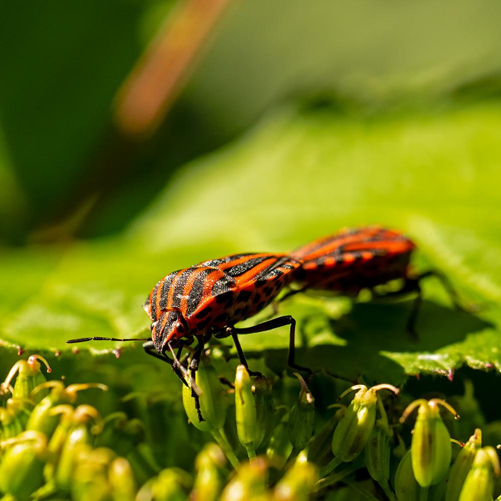 Macros/  proxi/  insectes  - Page 7 50167733842_522979f611_o