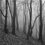 07 Otley Chevin trees