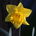 Cometh The Spring - 74/100
