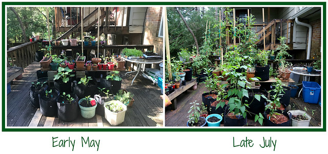 My Lil' Container Garden - Summer Garden 2020 early_may-vs_late_july_garden