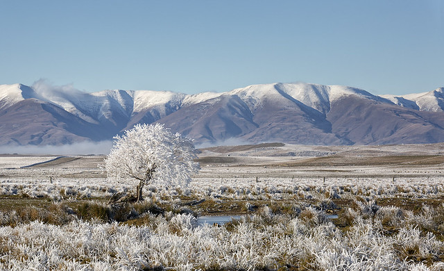 Stunning scenery, farmland with a hoar frost, near Waipiata with the Kakanui Mountains as a backdrop.