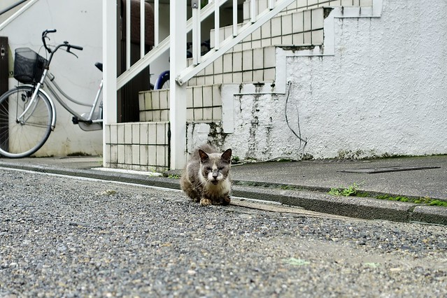 Today's Cat@2020ー07ー30