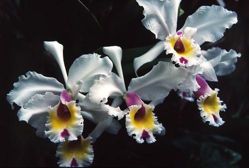 Orchids (1)