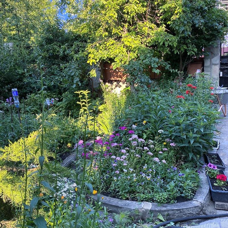 Огород в июле