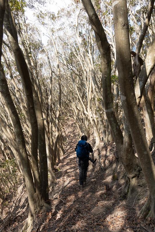 烏場山の登山道