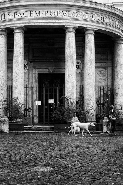 ROMA [In the mood of covid]