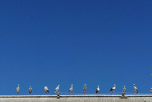 social distancing in storks...alrededor del basurero