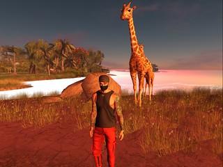 selfie girafe