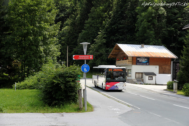 Bunte Buswelt - Wald im Pinzgau