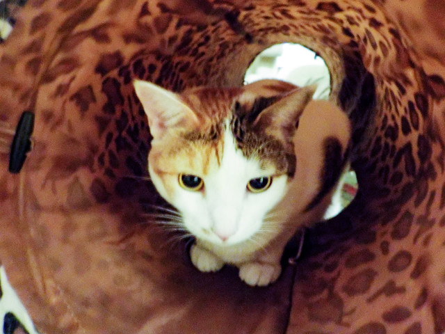 Tally in her Tunnel