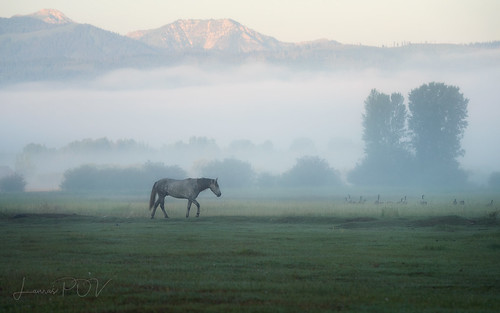 Mist:  the sweet breath of morning