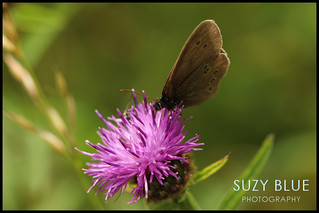 Ringlet | by suzypud