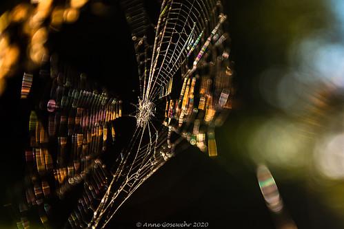 cobweb prism light spectrum colors colorsofgold evening spider catchinglight bokeh sunset goldensunset dark spinnennetz prisma bendinglight lichtbrechung abendlicht abend sinneswald leichlingenbalken